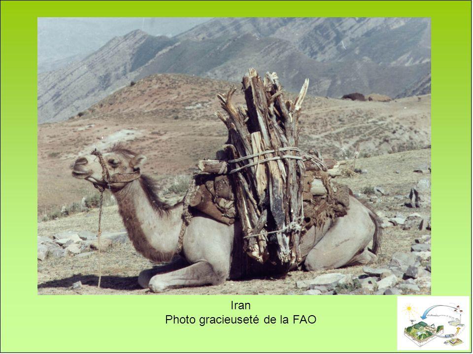 Iran Photo gracieuseté de la FAO