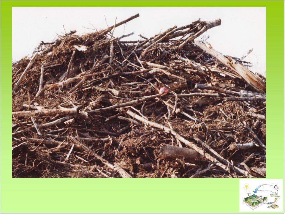 Lors de la récolte de résidus: Laisser les aiguilles sur place, ou fertiliser.