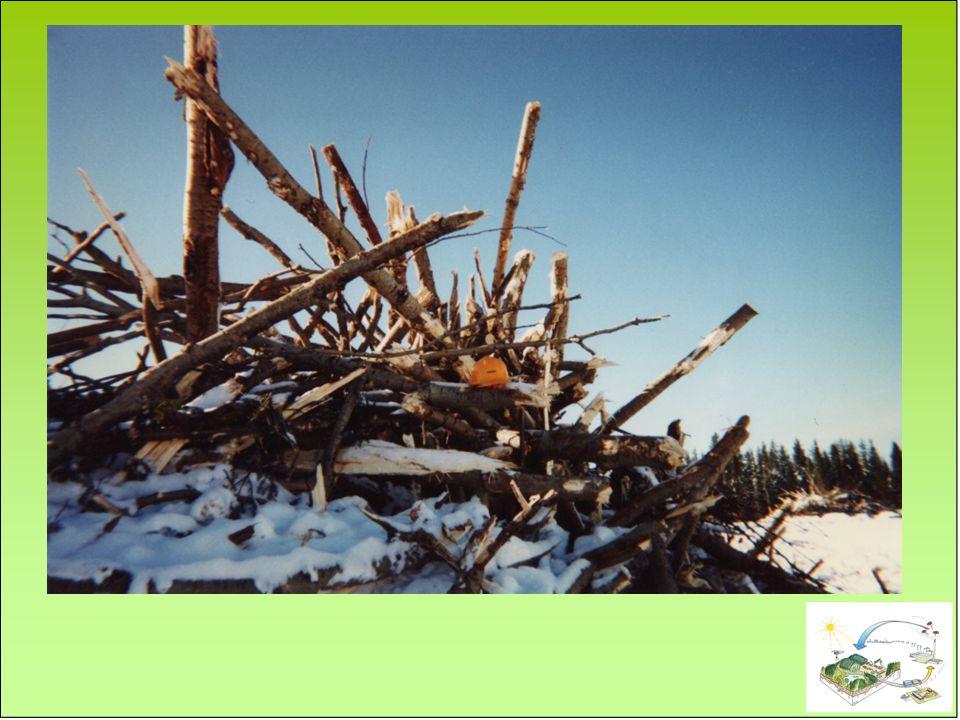 Solutions dopérations forestières permettant: - Flexibilité dans la récolte des résidus selon la sensibilité du site - Laisser les résidus sécher sur le site avant la récolte (retour des aiguilles et brindilles) Suivi écologique Sol, feuillage, croissance, biodiversité Pour conclure… Développement de lignes directrices maison Oui à la récolte des résidus de coupe, mais: