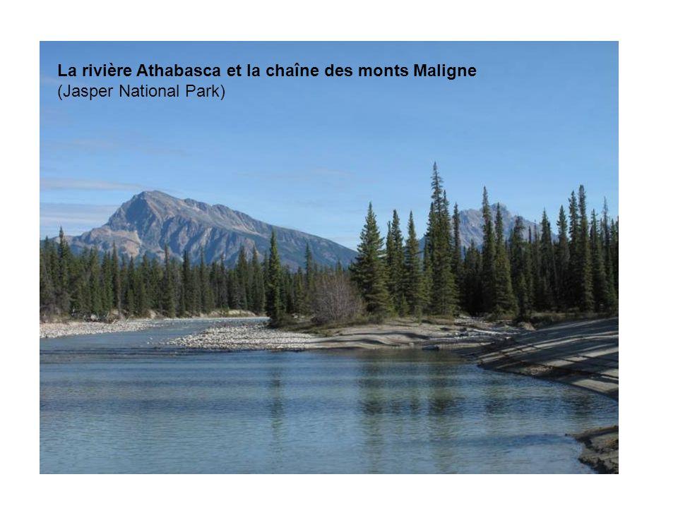 La rivière Athabasca et la chaîne des monts Maligne (Jasper National Park)