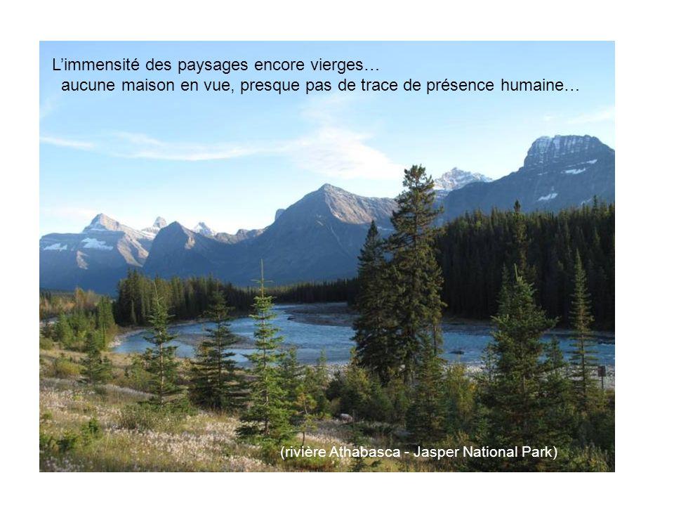 Limmensité des paysages encore vierges… aucune maison en vue, presque pas de trace de présence humaine… (rivière Athabasca - Jasper National Park)