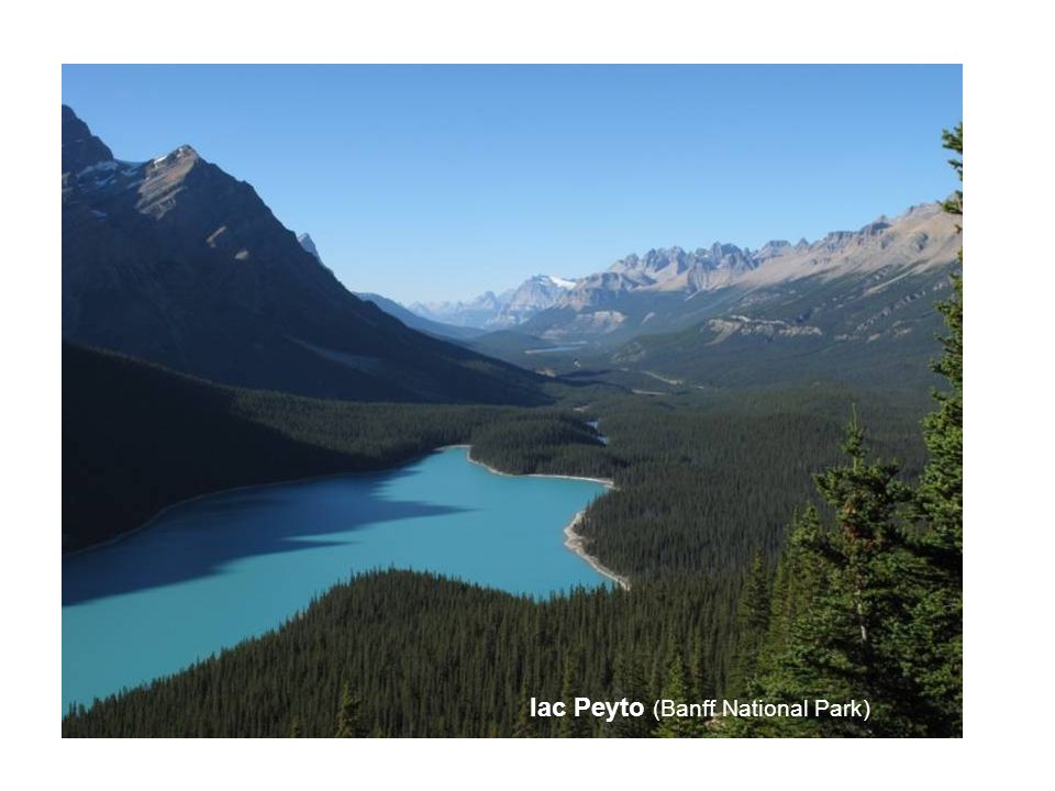 lac Peyto (Banff National Park)