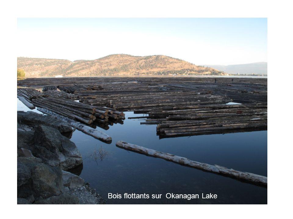 Bois flottants sur Okanagan Lake