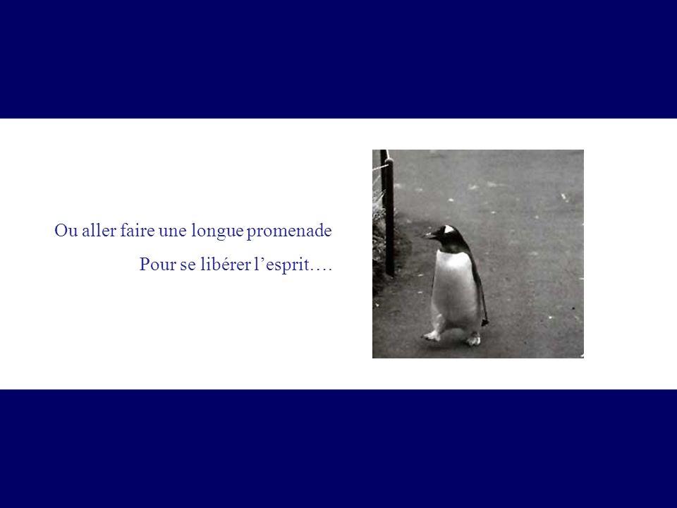 Ou aller faire une longue promenade Pour se libérer lesprit….
