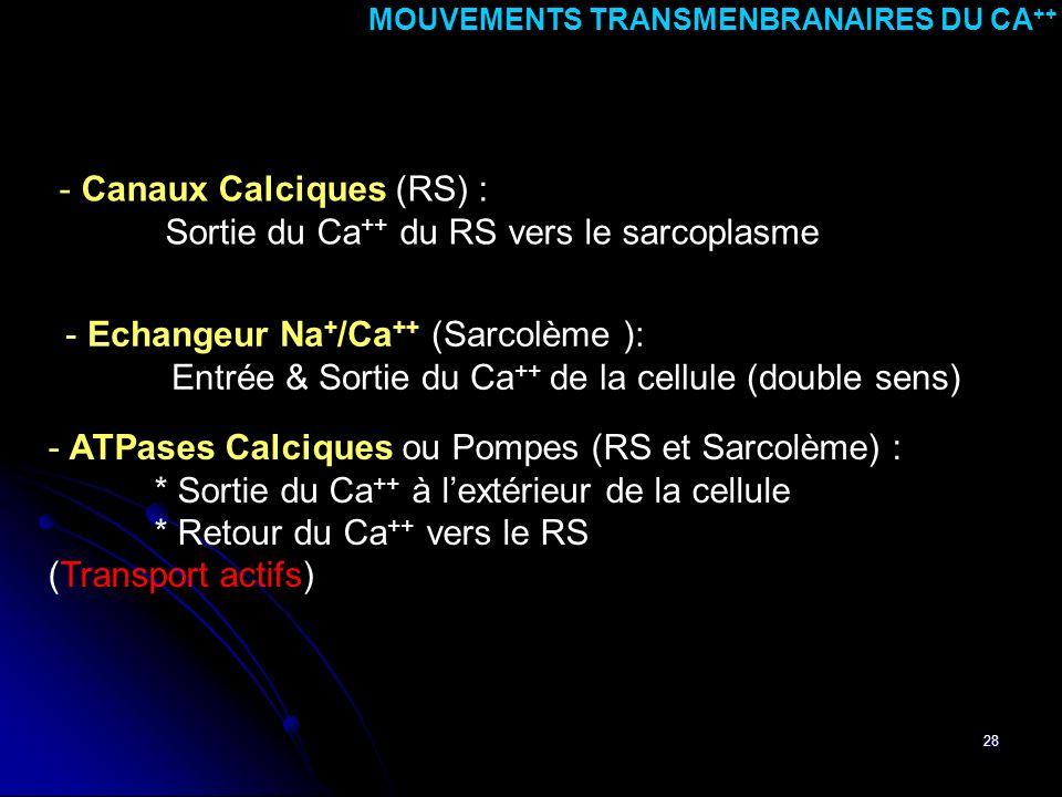 28 - ATPases Calciques ou Pompes (RS et Sarcolème) : * Sortie du Ca ++ à lextérieur de la cellule * Retour du Ca ++ vers le RS (Transport actifs) MOUV