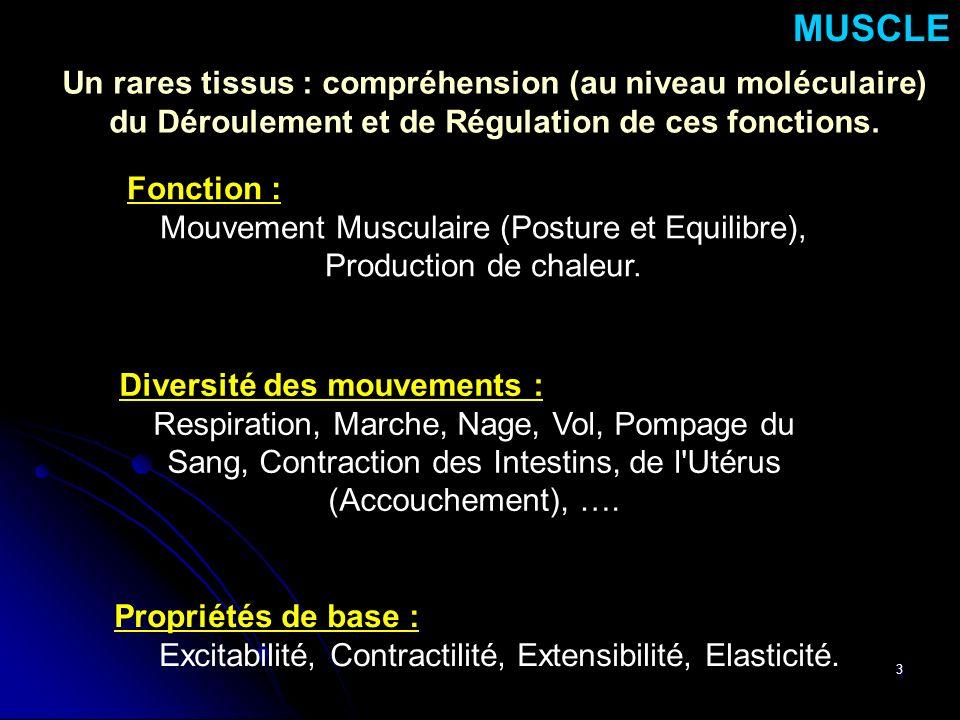 3 Propriétés de base : Excitabilité, Contractilité, Extensibilité, Elasticité. MUSCLE Fonction : Mouvement Musculaire (Posture et Equilibre), Producti