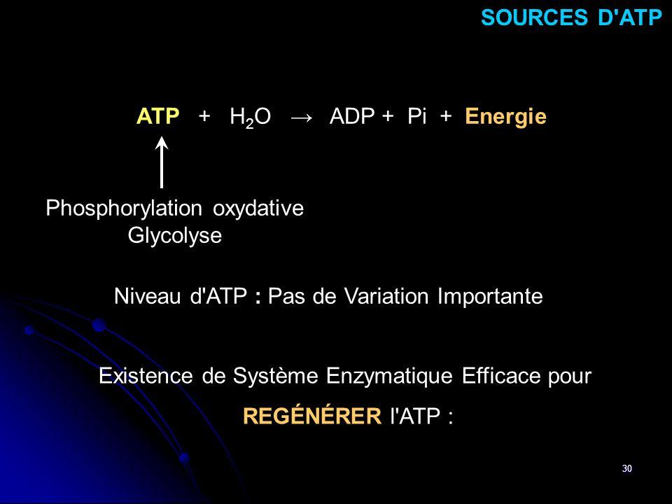 30 SOURCES D'ATP Existence de Système Enzymatique Efficace pour REGÉNÉRER l'ATP : ATP + H 2 O ADP + Pi + Energie Phosphorylation oxydative Glycolyse N