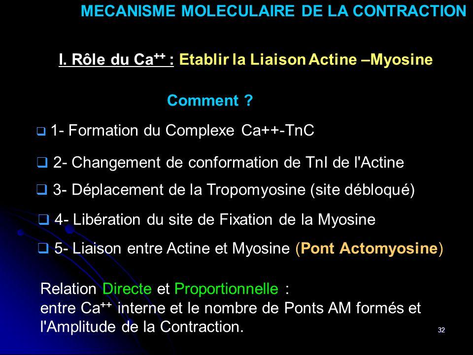 32 5- Liaison entre Actine et Myosine (Pont Actomyosine) MECANISME MOLECULAIRE DE LA CONTRACTION I. Rôle du Ca ++ : Etablir la Liaison Actine –Myosine
