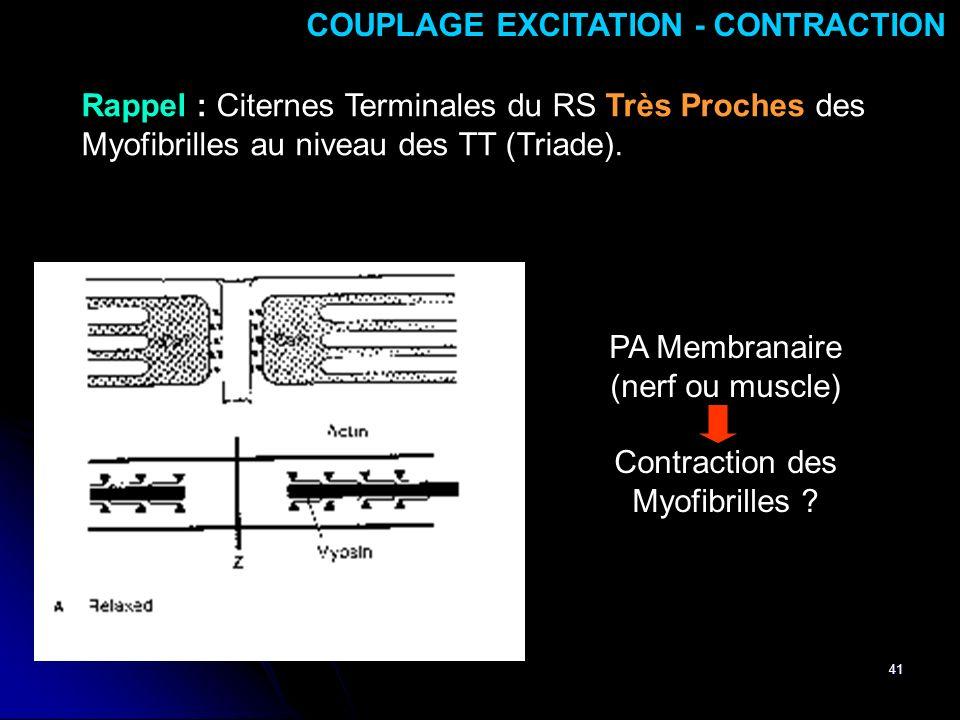 41 COUPLAGE EXCITATION - CONTRACTION Rappel : Citernes Terminales du RS Très Proches des Myofibrilles au niveau des TT (Triade). PA Membranaire (nerf