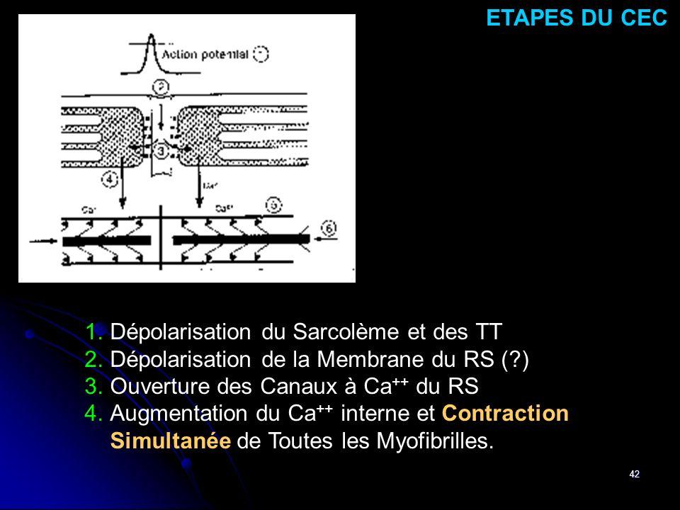 42 1.Dépolarisation du Sarcolème et des TT 2.Dépolarisation de la Membrane du RS (?) 3.Ouverture des Canaux à Ca ++ du RS 4.Augmentation du Ca ++ inte