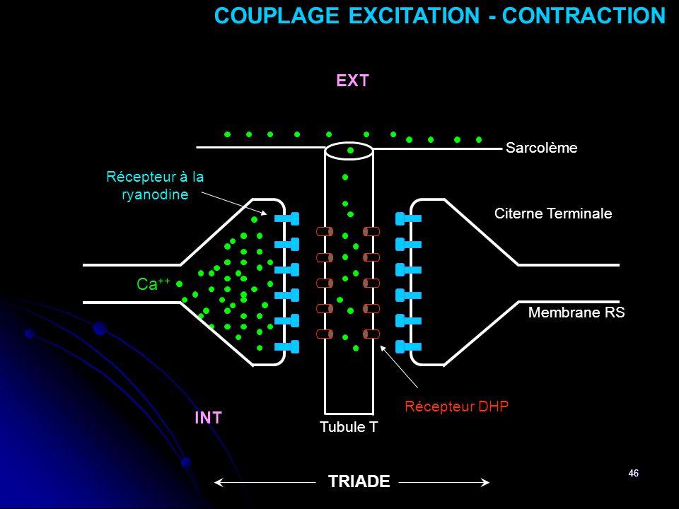 46 Membrane RS Ca ++ Tubule T Récepteur DHP Récepteur à la ryanodine Sarcolème Citerne Terminale TRIADE EXT INT COUPLAGE EXCITATION - CONTRACTION