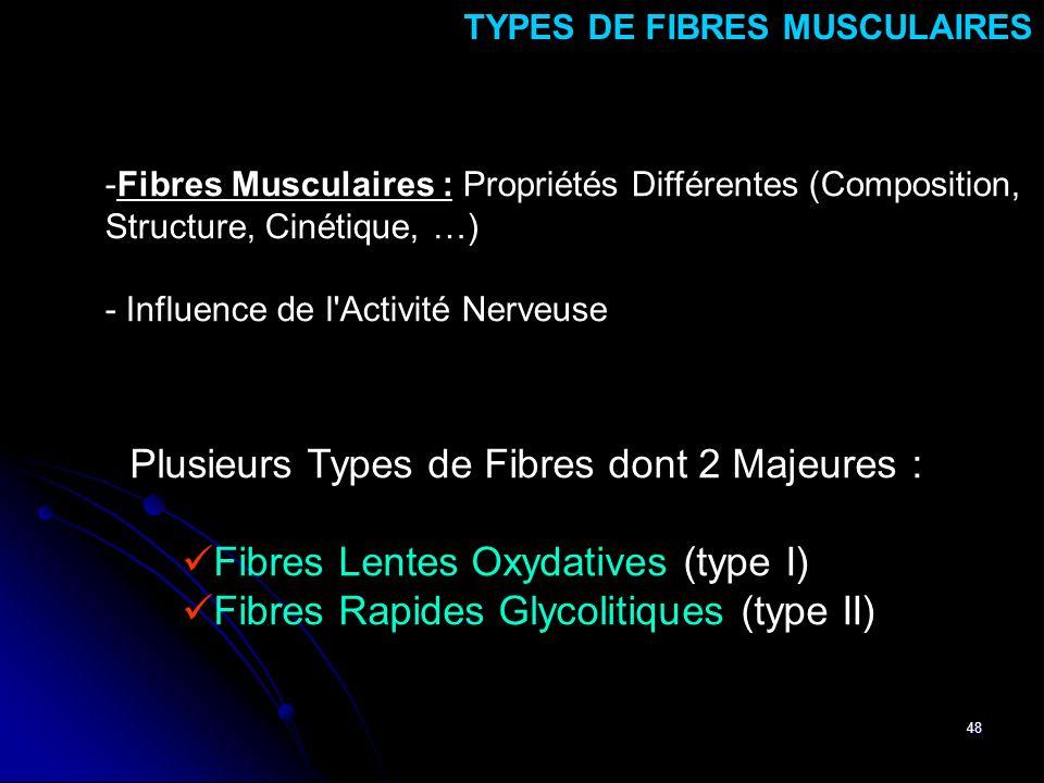 48 -Fibres Musculaires : Propriétés Différentes (Composition, Structure, Cinétique, …) - Influence de l'Activité Nerveuse TYPES DE FIBRES MUSCULAIRES
