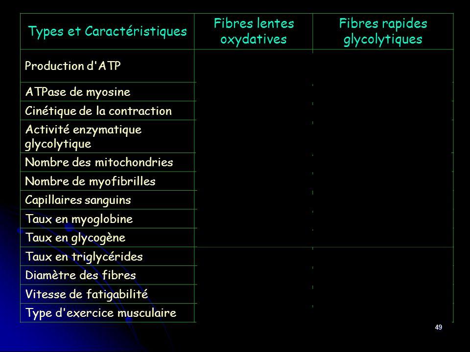 49 Types et Caractéristiques Fibres lentes oxydatives Fibres rapides glycolytiques Production d'ATP Phosphorylation oxydative Glycolyse anaérobie ATPa