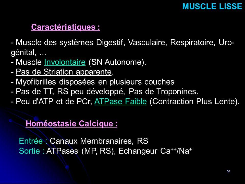 51 - Muscle des systèmes Digestif, Vasculaire, Respiratoire, Uro- génital,... - Muscle Involontaire (SN Autonome). - Pas de Striation apparente. - Myo