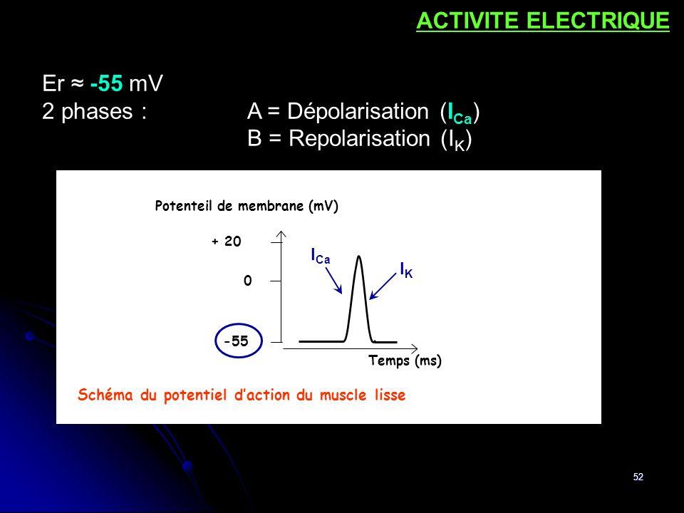 52 -55 + 20 0 Potenteil de membrane (mV) Temps (ms) Schéma du potentiel daction du muscle lisse Er -55 mV 2 phases :A = Dépolarisation (I Ca ) B = Rep