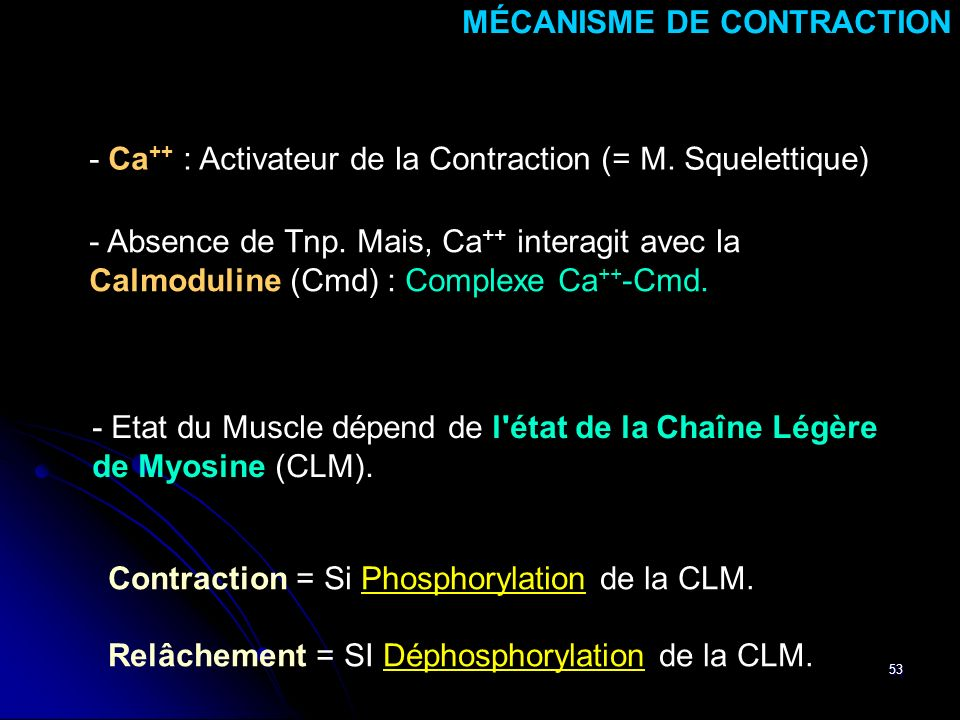 53 MÉCANISME DE CONTRACTION - Ca ++ : Activateur de la Contraction (= M.