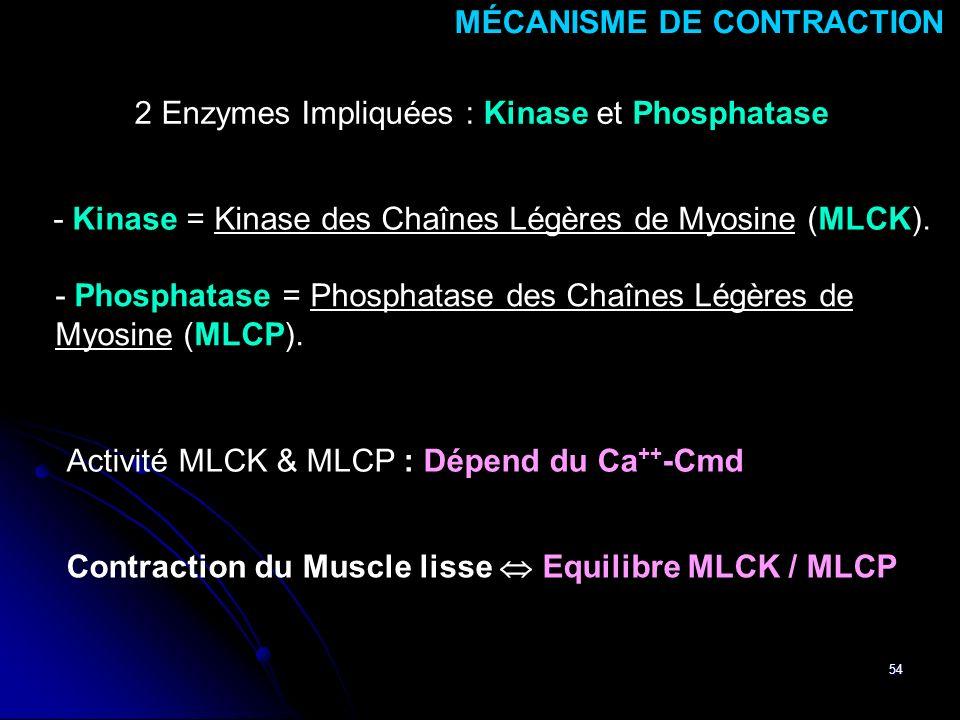 54 Activité MLCK & MLCP : Dépend du Ca ++ -Cmd 2 Enzymes Impliquées : Kinase et Phosphatase MÉCANISME DE CONTRACTION Contraction du Muscle lisse Equil
