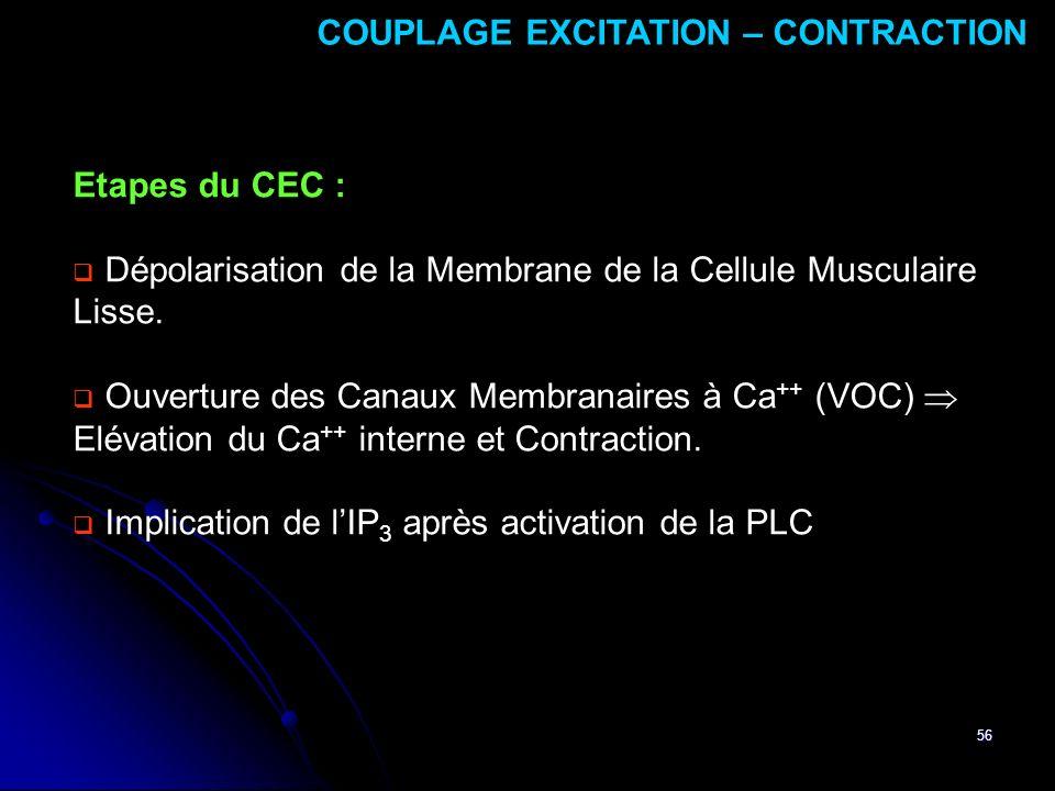 56 Etapes du CEC : Dépolarisation de la Membrane de la Cellule Musculaire Lisse. Ouverture des Canaux Membranaires à Ca ++ (VOC) Elévation du Ca ++ in