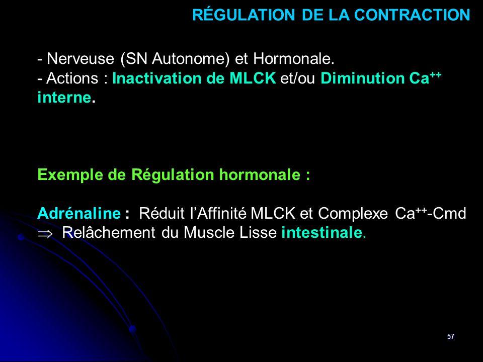 57 - Nerveuse (SN Autonome) et Hormonale. - Actions : Inactivation de MLCK et/ou Diminution Ca ++ interne. RÉGULATION DE LA CONTRACTION Exemple de Rég