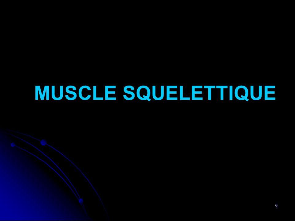 7 Squelettique : Attaché au Squelette (Mouvement du squelette) Muscle Volontaire Constitution : Fibres ou Cellules Musculaires (Myocytes) + Tissu Conjonctif Constituants de la Fibre Musculaire : - Membrane Plasmique ou Sarcolème - Noyau, Mitochondries, Appareil de Golgi - Réticulum Sacroplasmique (RS) : Réserve ce Ca ++ - Myofibrilles (Protéines en faisceaux, volume important, Siège de la contraction) - Sarcoplasme ou Cytosol (cytoplasme)