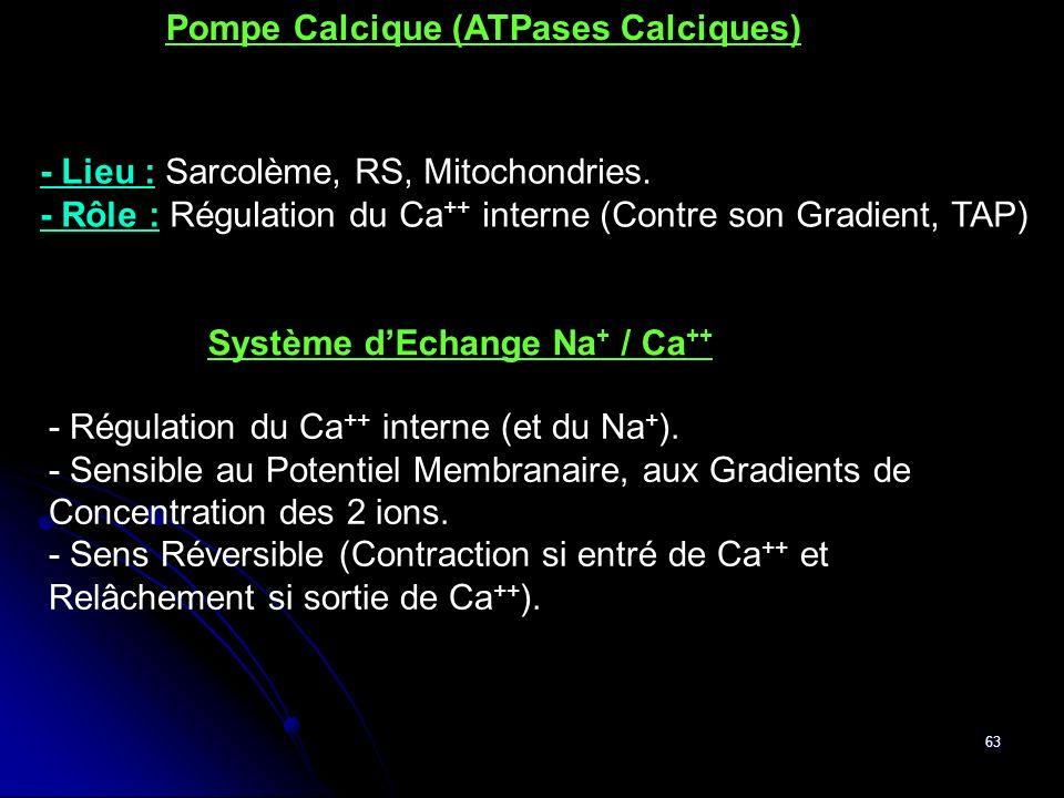 63 - Régulation du Ca ++ interne (et du Na + ). - Sensible au Potentiel Membranaire, aux Gradients de Concentration des 2 ions. - Sens Réversible (Con