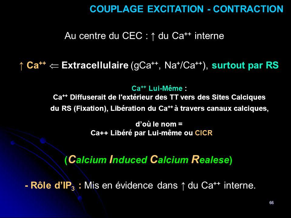 66 COUPLAGE EXCITATION - CONTRACTION Ca ++ Extracellulaire (gCa ++, Na + /Ca ++ ), surtout par RS - Rôle dIP 3 : Mis en évidence dans du Ca ++ interne