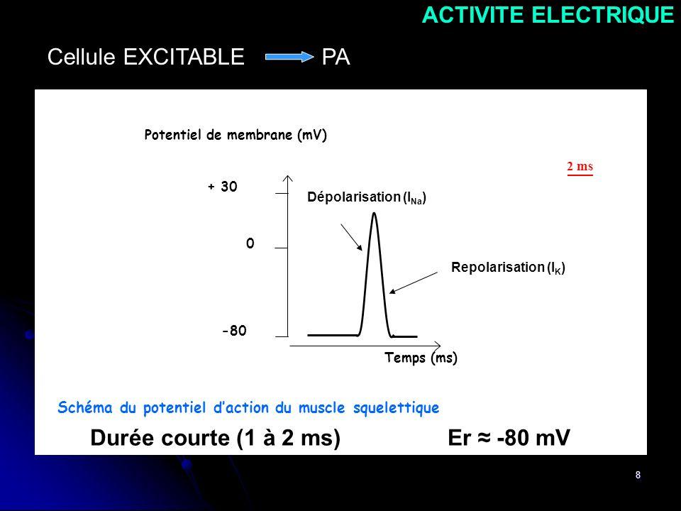 8 -80 + 30 0 Potentiel de membrane (mV) Temps (ms) AB Schéma du potentiel daction du muscle squelettique 2 ms Durée courte (1 à 2 ms) Er -80 mV ACTIVI