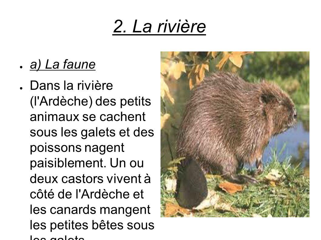 2. La rivière a) La faune Dans la rivière (l'Ardèche) des petits animaux se cachent sous les galets et des poissons nagent paisiblement. Un ou deux ca