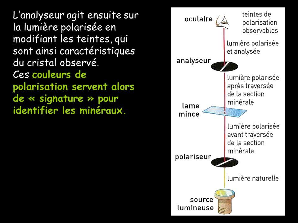 Lanalyseur agit ensuite sur la lumière polarisée en modifiant les teintes, qui sont ainsi caractéristiques du cristal observé. Ces couleurs de polaris