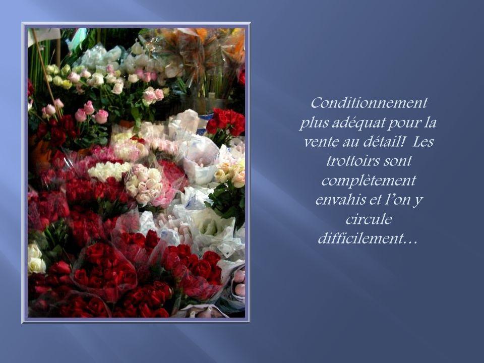 En fait, toutes les fleurs bénéficient de ce genre demballage…