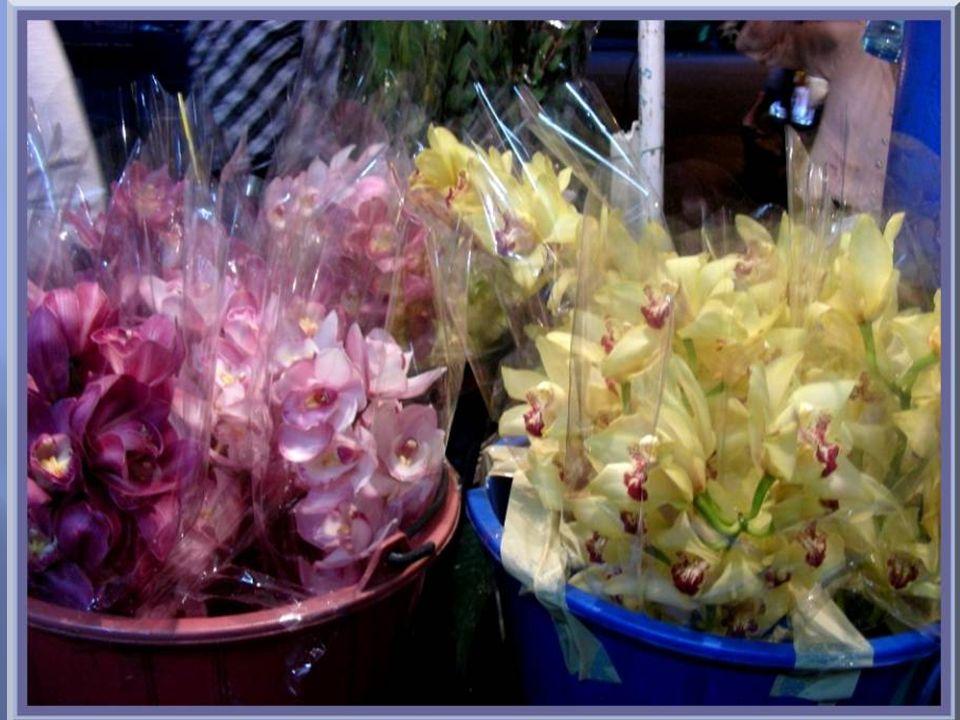 Toujours les orchidées…