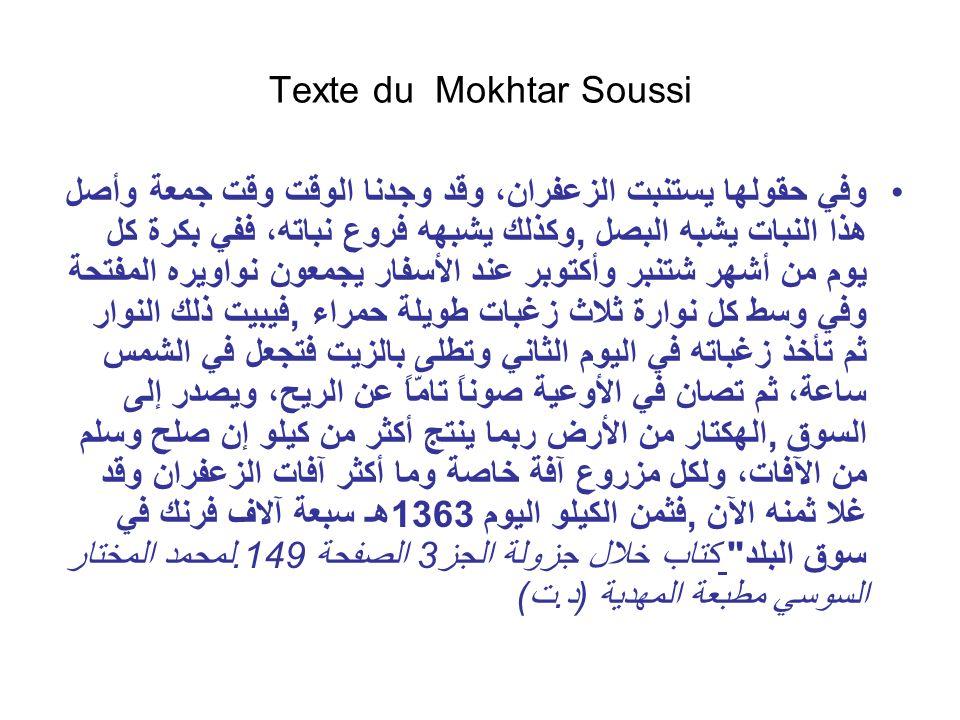 Texte du Mokhtar Soussi وفي حقولها يستنبت الزعفران، وقد وجدنا الوقت وقت جمعة وأصل هذا النبات يشبه البصل, وكذلك يشبهه فروع نباته، ففي بكرة كل يوم من أش