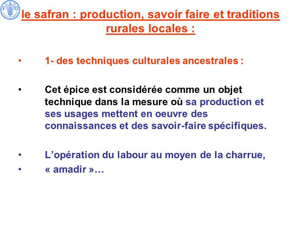 le safran : production, savoir faire et traditions rurales locales : 1- des techniques culturales ancestrales : Cet épice est considérée comme un obje