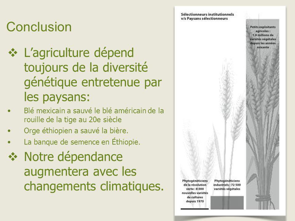 Conclusion Lagriculture dépend toujours de la diversité génétique entretenue par les paysans: Blé mexicain a sauvé le blé américain de la rouille de la tige au 20e siècle Orge éthiopien a sauvé la bière.