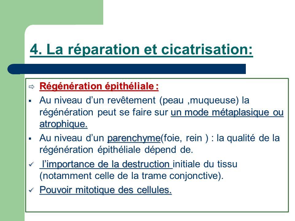 4. La réparation et cicatrisation: Régénération épithéliale : Régénération épithéliale : un mode métaplasique ou atrophique. Au niveau dun revêtement