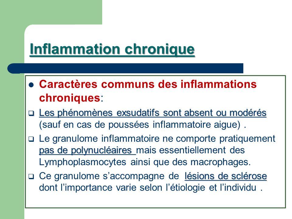 Inflammation chronique Caractères communs des inflammations chroniques: Les phénomènes exsudatifs sont absent ou modérés Les phénomènes exsudatifs son