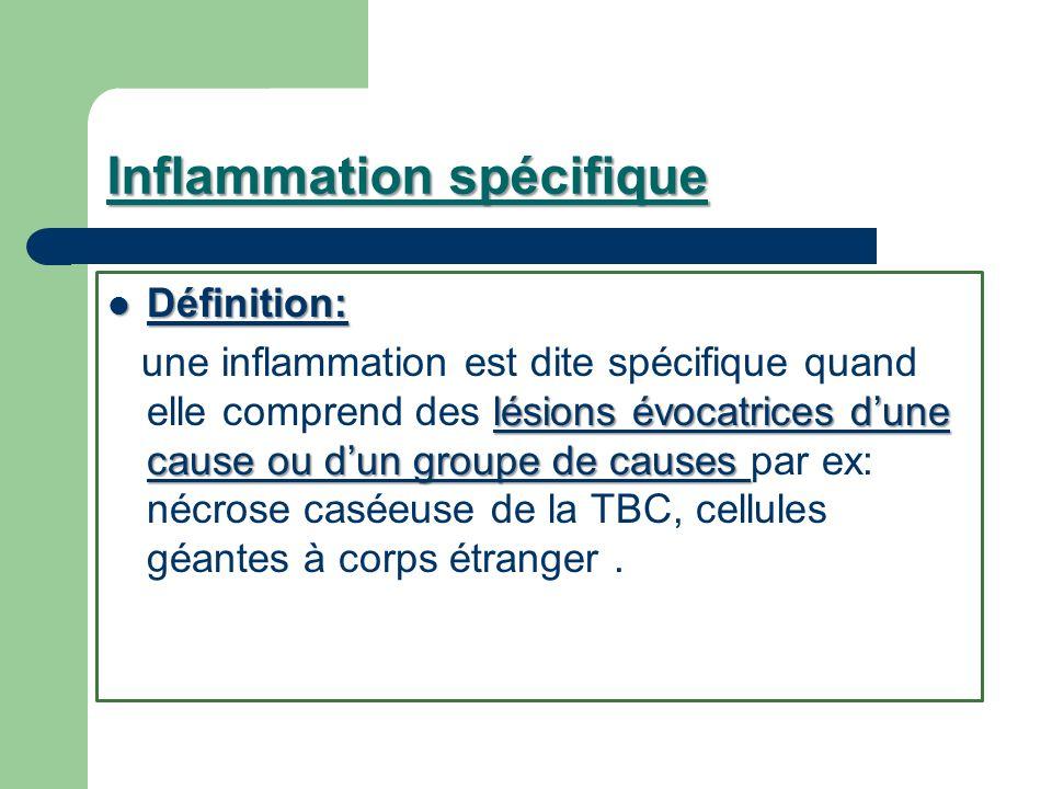 Inflammation spécifique Définition: Définition: lésions évocatrices dune cause ou dun groupe de causes une inflammation est dite spécifique quand elle