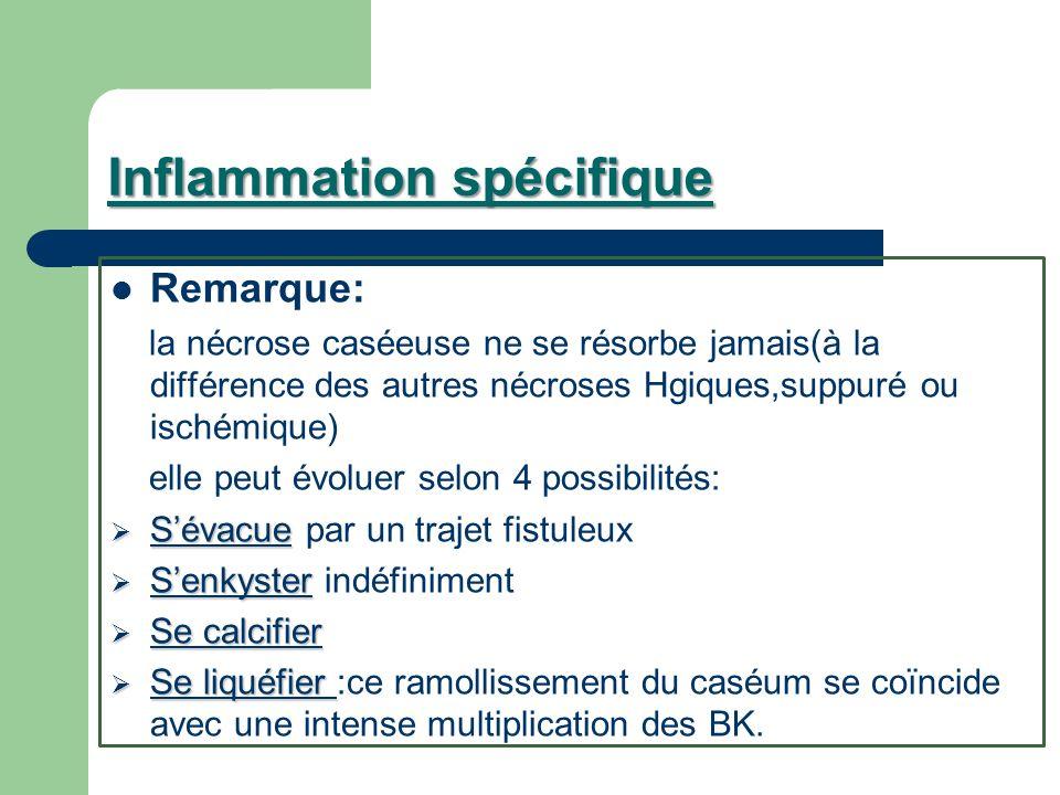 Inflammation spécifique Remarque: la nécrose caséeuse ne se résorbe jamais(à la différence des autres nécroses Hgiques,suppuré ou ischémique) elle peu