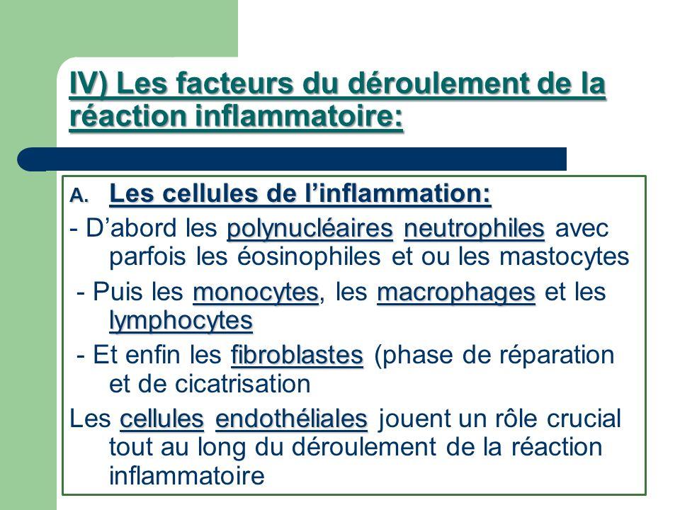 IV) Les facteurs du déroulement de la réaction inflammatoire: A. Les cellules de linflammation: polynucléairesneutrophiles - Dabord les polynucléaires