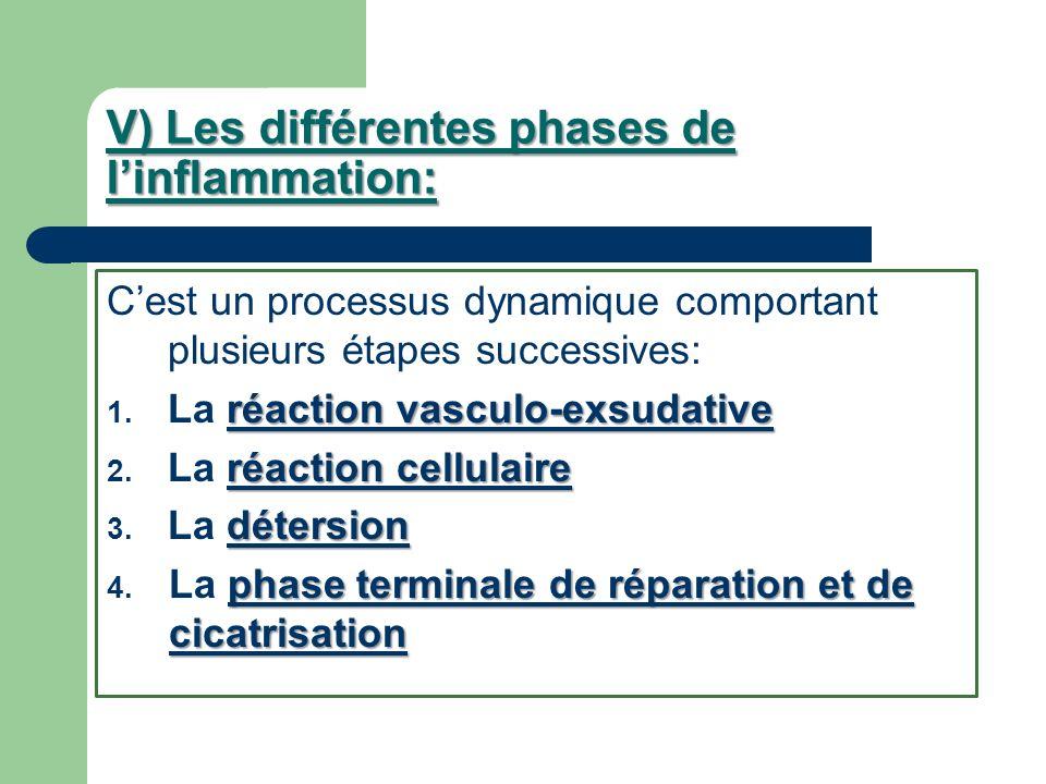 V) Les différentes phases de linflammation: Cest un processus dynamique comportant plusieurs étapes successives: réaction vasculo-exsudative 1. La réa