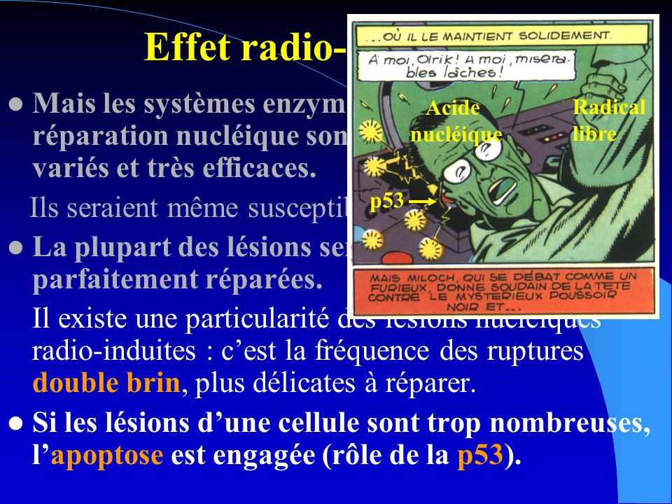 Effet radio-biologique Donc pour une dose absorbée donnée (en Gy), leffet biologique, dû à une lésion non réparée dacide nucléique, va dépendre 1) de la densité spatiale des ionisations, particule à densité dionisation faible >, X particule à densité dionisation élevée >, p, n