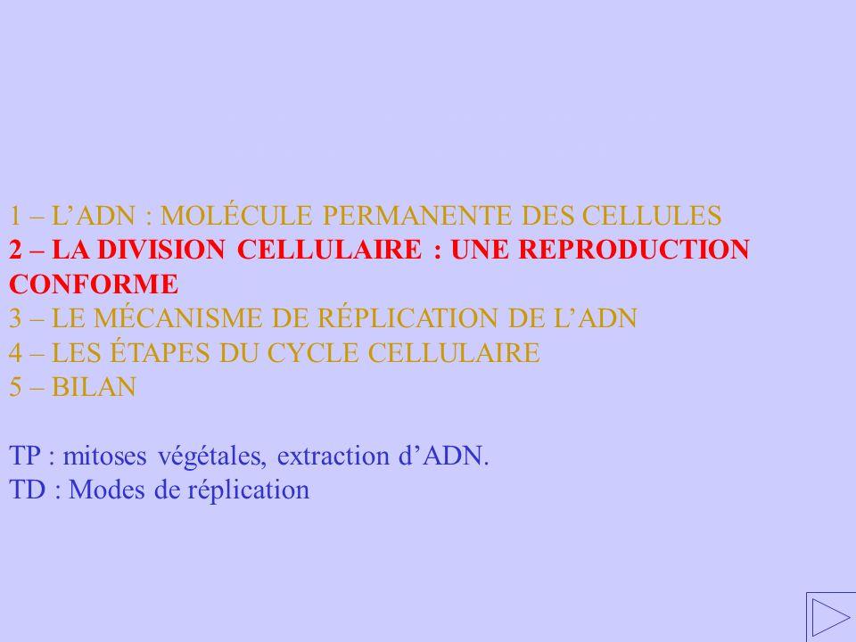 2 – LA DIVISION CELLULAIRE : UNE REPRODUCTION CONFORME 1 – LADN : MOLÉCULE PERMANENTE DES CELLULES 2 – LA DIVISION CELLULAIRE : UNE REPRODUCTION CONFO