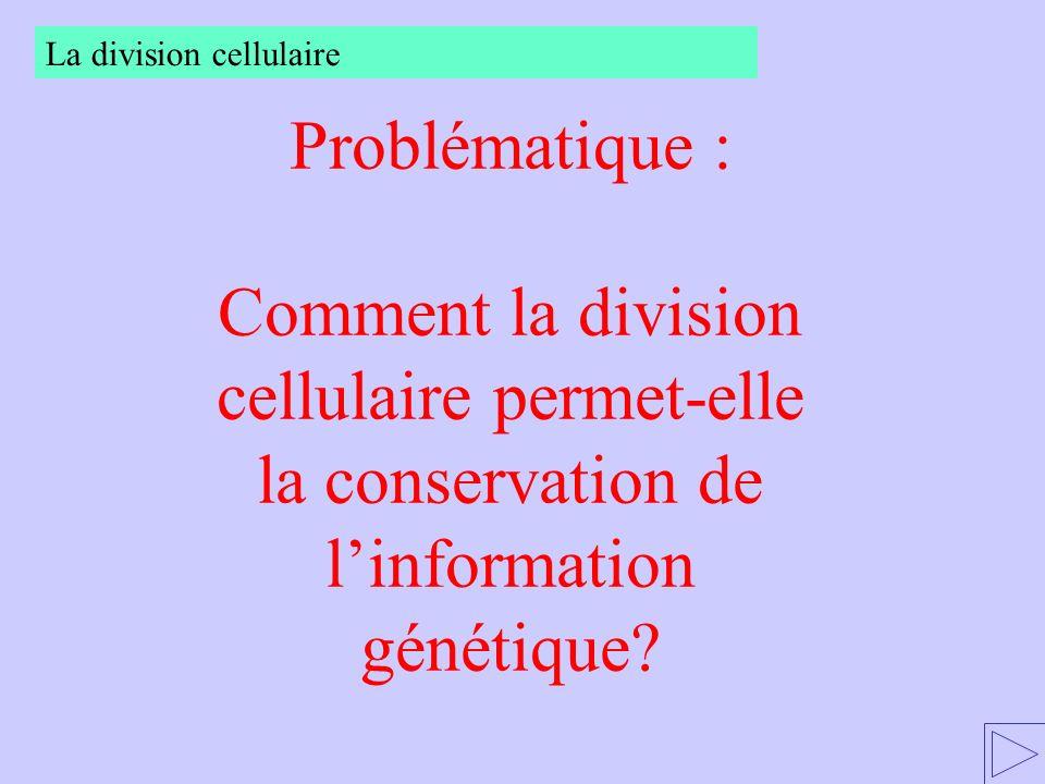 Problématique : Comment la division cellulaire permet-elle la conservation de linformation génétique? La division cellulaire