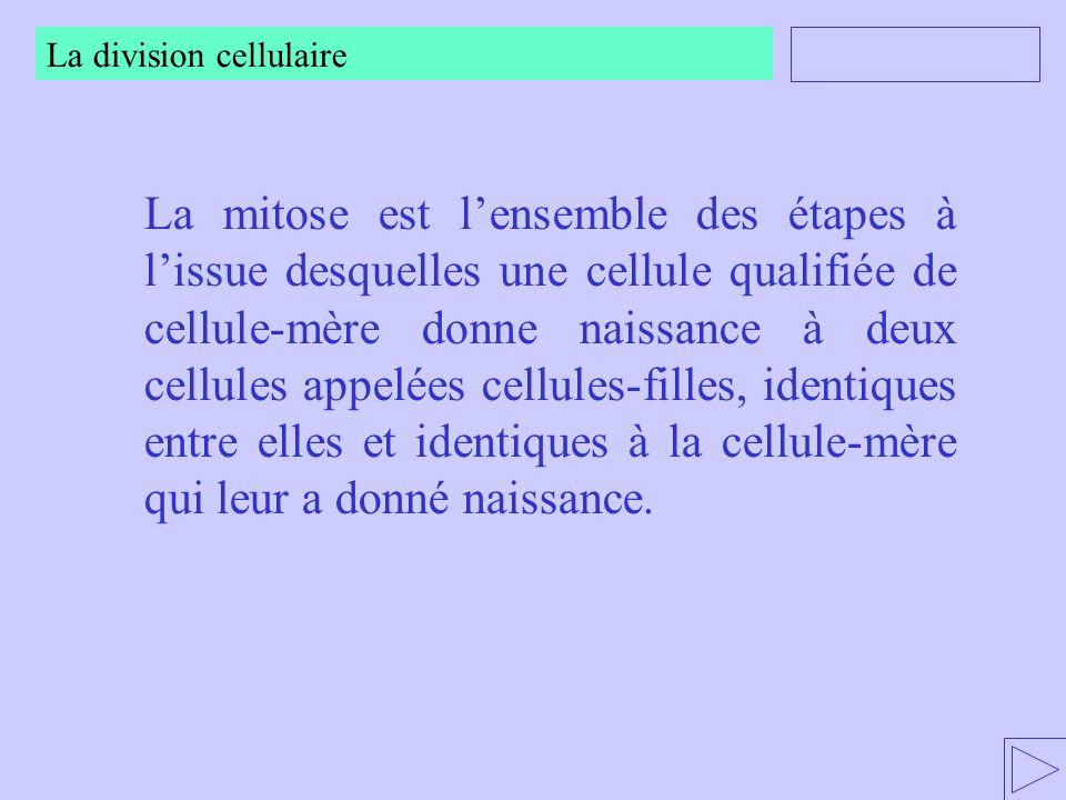 La mitose est lensemble des étapes à lissue desquelles une cellule qualifiée de cellule-mère donne naissance à deux cellules appelées cellules-filles,