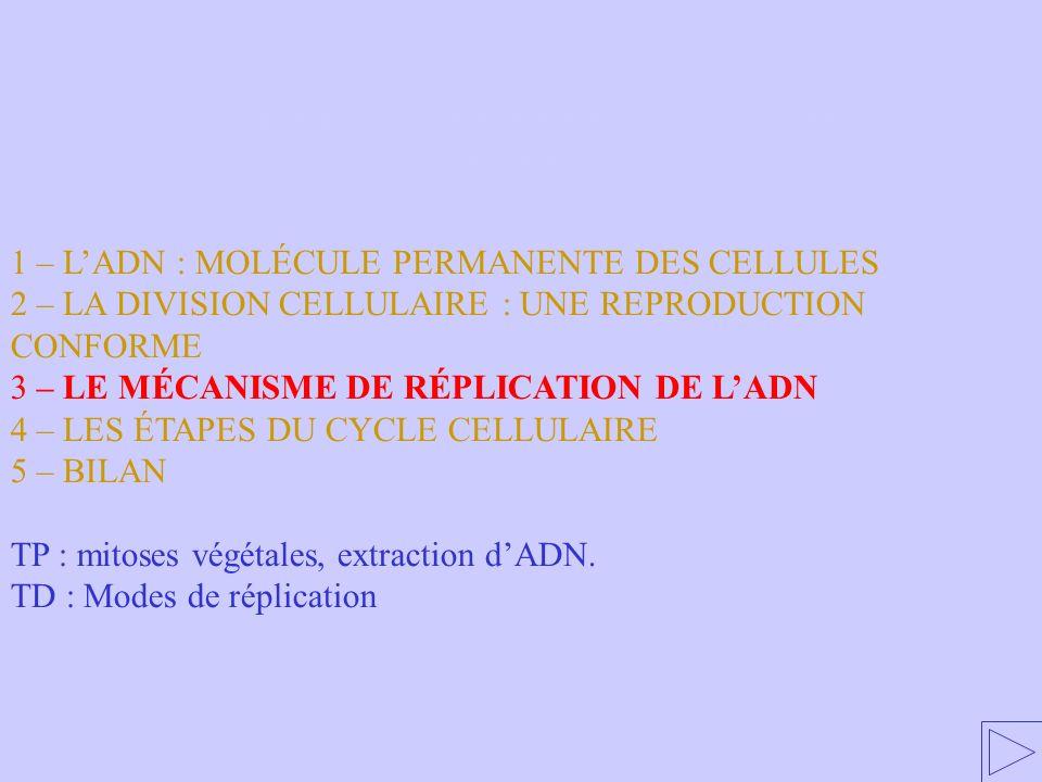 3 – LE MÉCANISME DE RÉPLICATION DE LADN 1 – LADN : MOLÉCULE PERMANENTE DES CELLULES 2 – LA DIVISION CELLULAIRE : UNE REPRODUCTION CONFORME 3 – LE MÉCA