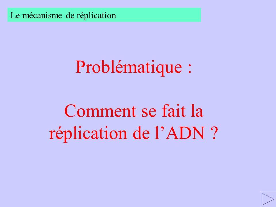 Problématique : Comment se fait la réplication de lADN ? Le mécanisme de réplication