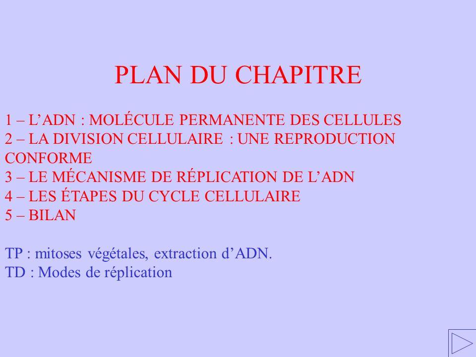 1 - LADN : MOLÉCULE PERMANENTE DES CELLULES 1 – LADN : MOLÉCULE PERMANENTE DES CELLULES 2 – LA DIVISION CELLULAIRE : UNE REPRODUCTION CONFORME 3 – LE MÉCANISME DE RÉPLICATION DE LADN 4 – LES ÉTAPES DU CYCLE CELLULAIRE 5 – BILAN TP : mitoses végétales, extraction dADN.