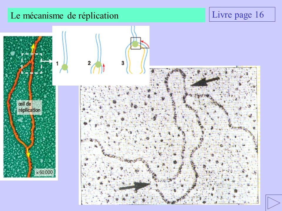 Livre page 16 Le mécanisme de réplication
