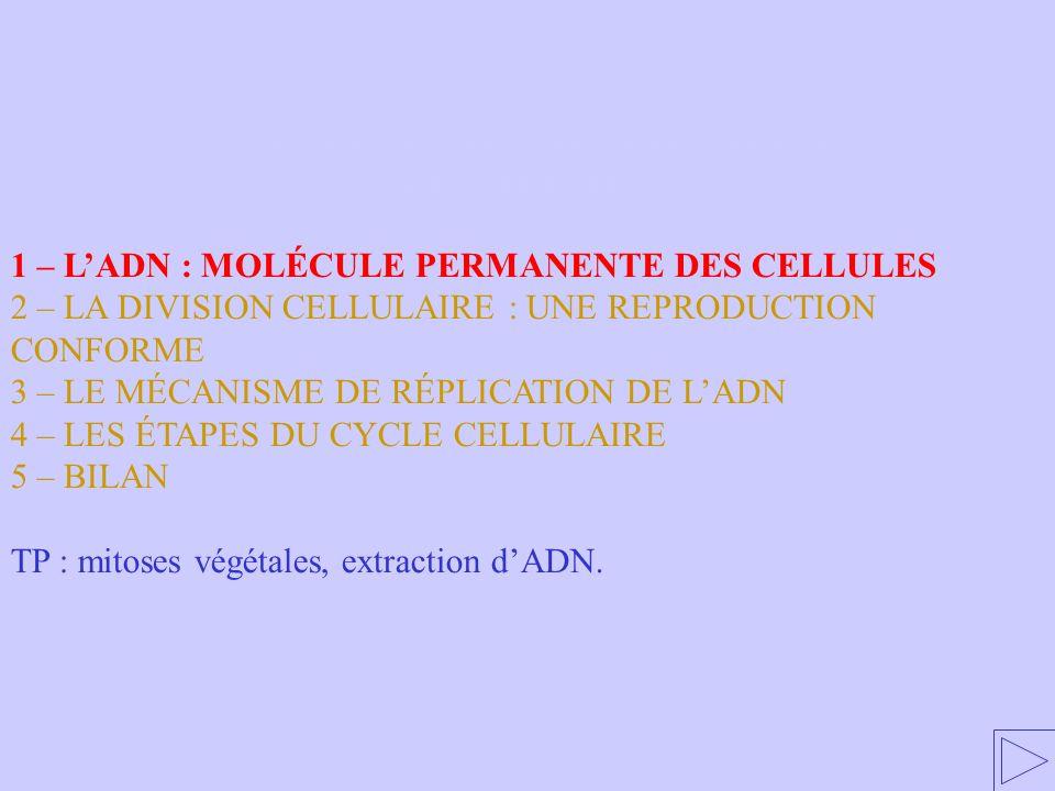 1 - LADN : MOLÉCULE PERMANENTE DES CELLULES 1 – LADN : MOLÉCULE PERMANENTE DES CELLULES 2 – LA DIVISION CELLULAIRE : UNE REPRODUCTION CONFORME 3 – LE