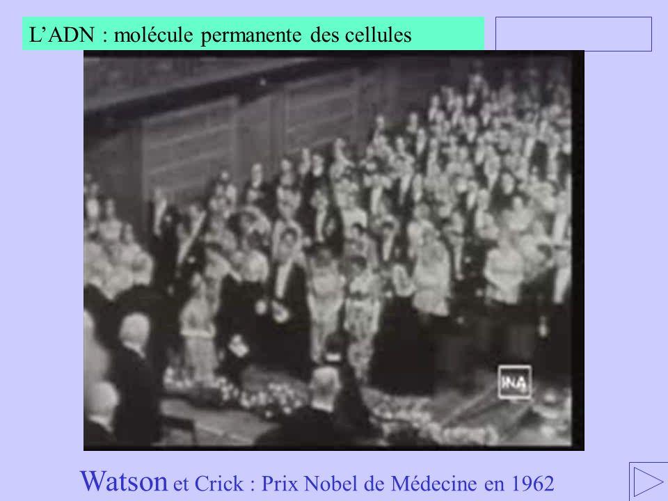 Watson et Crick : Prix Nobel de Médecine en 1962 LADN : molécule permanente des cellules